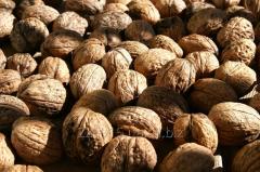 Nuts. Walnut. Producer. Ukraine, export. Rovno