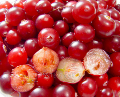 Cranberry (fresh, frozen, dried). Producer. Rovno