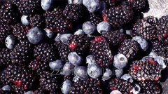 Berries. Guelder-rose, bilberry, blackberry,
