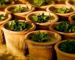 Инновация: Экологический горшок для выращивания растений