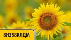Seeds of sunflower of Dau Sids 8N358KLDM of Dow