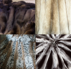 Fur of mink
