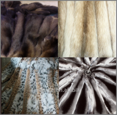 Natural fur of fox