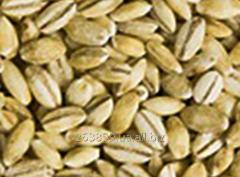 Pearl barley of 0,5 kg