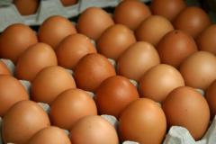 Яйцо инкубационное, цыплята под заказ