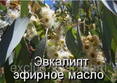 Eucalyptus - essential oil (Germany) of-10 ml