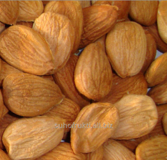 Apricot kernel
