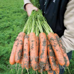Семена моркови Балтимор  1,8-2,0мм  F1 1 млн шт