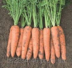 Семена моркови Белградо F1  1,6-1,8 мм 1 млн шт