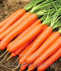 Семена моркови Белградо F1  1,8-2,0мм 1 млн шт