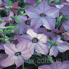Семена цветов табака Blue 250 драже