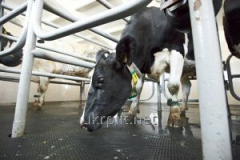Покриття для тваринницьких комплексів