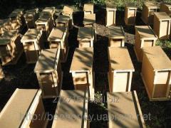 Пчелопакеты карпатской породы в Мукачево 2016 год
