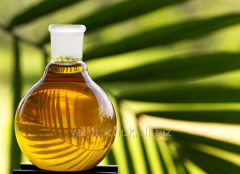 Sania palm-oil