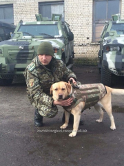 Bullet-proof vest for dogs