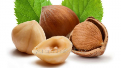 Nut filber
