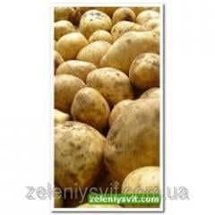 Картофель Аграрная 3 кг ФХ Лилия