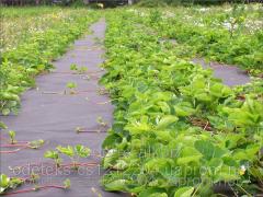 Agrofibre black mulching 60 gram/m.kv. 1,6 x 100