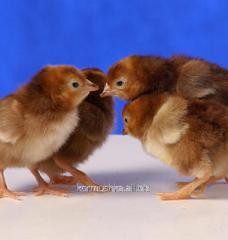 Комбикорм для молодняка яичных кур возрастом 9-17