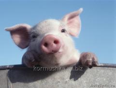 Дополняющая кормовая смесь для животных Антистресс