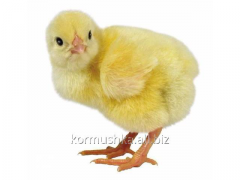 Комбикорм для цыплят 1-8 недель, ПК 2-6 ЗК