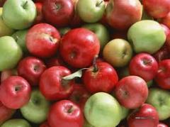 Продажа яблок украина ОПТ