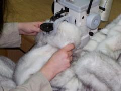 Products from natural fur: tailoring, repair