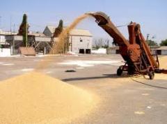 Продажа зерновых. Возможен экспорт. Купить зерно