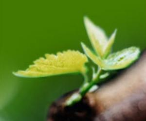 Fertilizers microbiological for plants