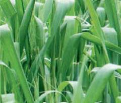 Agrochemistry (herbicides, insecticides,