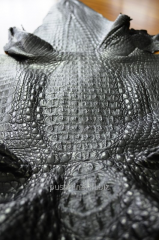 Leather of crocodile