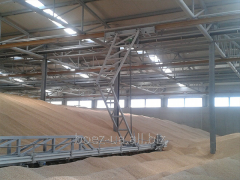 Warehouses of floor storage of grain