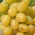 Grade of grapes of Arkady