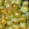 Бируинца, Саженцы винограда в Укаине, цена, фото,