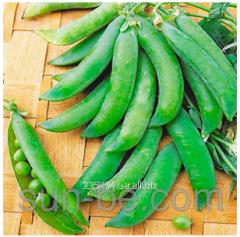 Seeds of peas of vegetable Bingo Syngenta of 100