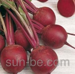 Seeds of beet table Harold