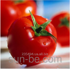 Seeds of tomato of 1 000 seeds F1 Syngenta Office