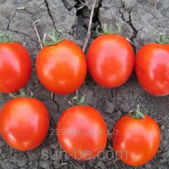 Seeds of tomato determinant Asvon F1