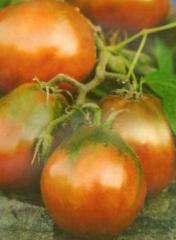 Семена томата высокорослого Бедуин (25 штук)