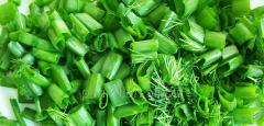Green (salad) onions