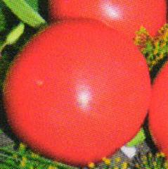 Семена томата высокорослого Розовый слон