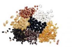 Семена на ленте продажа