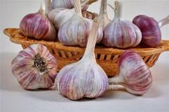 Garlic summer