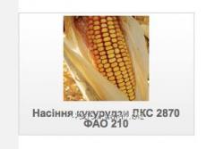 Семена Монсанто кукурузы ДКС  2870 ФАО 210