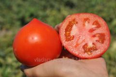 Tomato/determinate-Supernova F1