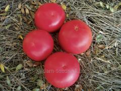 Tomato indeterminantny Fenda F1