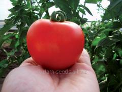 Tomato indeterminate Cristal F1
