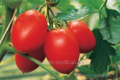 Tomato indeterminantny Humming-bird of F1