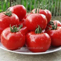 Tomato indeterminate Malik F1