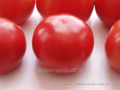 Fantazio F1 tomato seeds